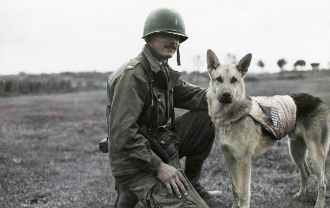 Military Dogs World War 2
